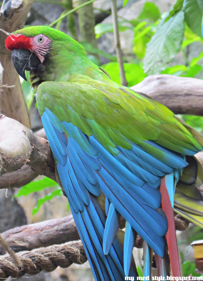Animal Kingdom Parrot