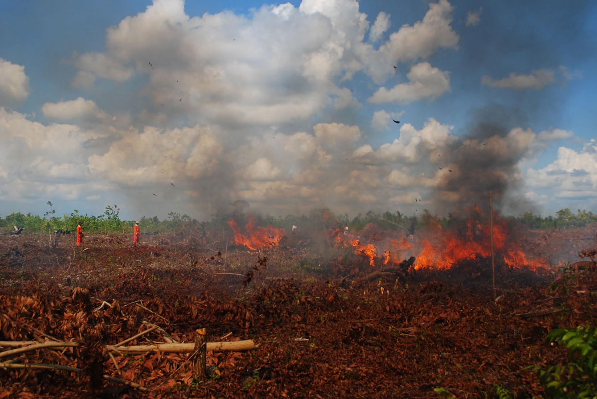 Kebakaran Hutan  dan Lahan Gambut di Kalimantan Tengah