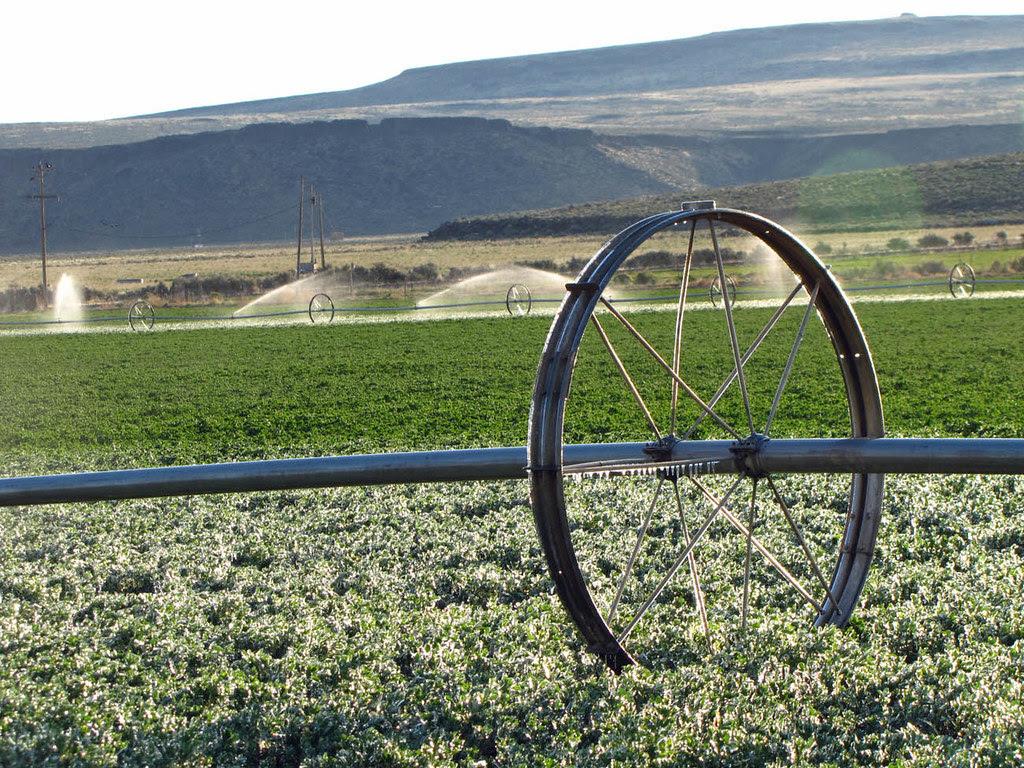 Cold Mornin' Irrigation