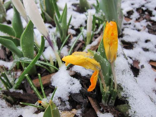 Ah, spring in Minnesota