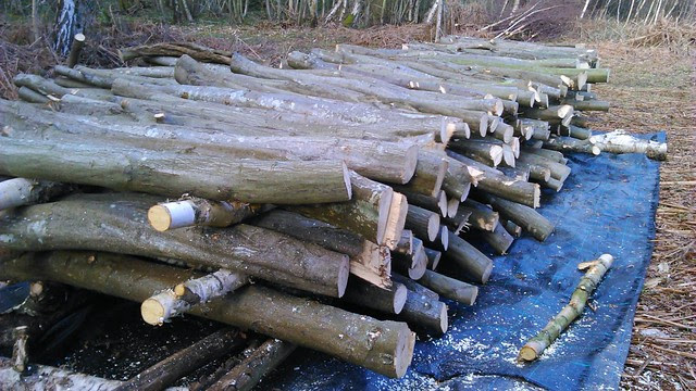 Stacked logs 2014-03-22 15.27.32