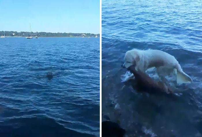 dog-saves-drowning-baby-deer-storm-8