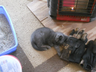 Mimi by the Heater