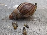 IMG_0696.jpg image by shaifuls