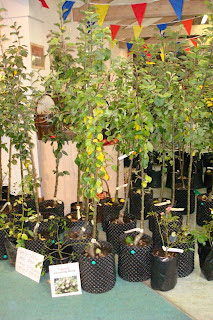 Apple trees on sale