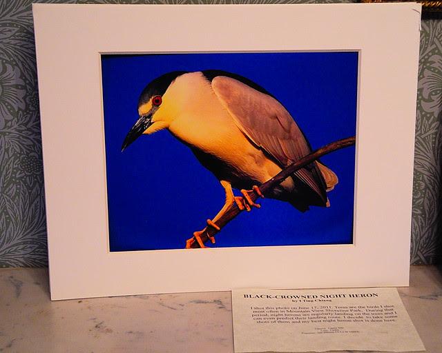 DSCN0579 Birds of Shoreline: Aflight
