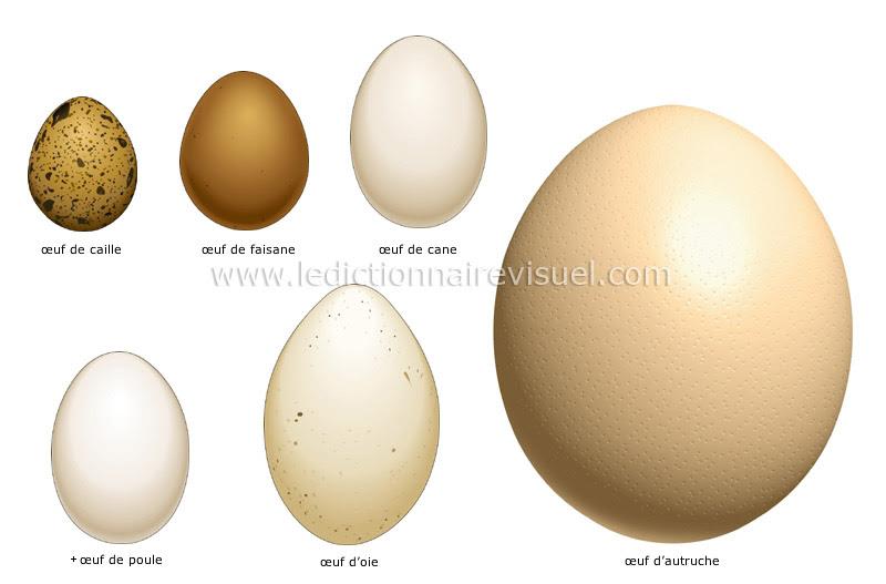 œufs - Le Dictionnaire Visuel