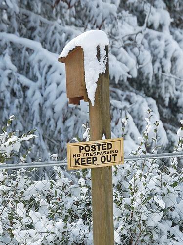 Birdhouse Snow