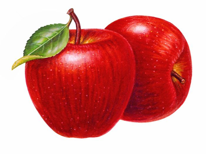 468 Best Apple Clip Art Images On Pinterest Drawings, Vegetables