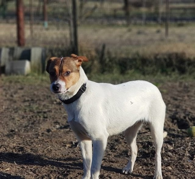 Turo – 7 month old female Cross-Breed