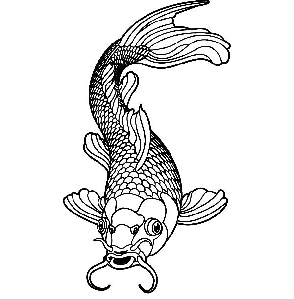 Healthy Male Koi Fish Coloring Pages - Download & Print ...
