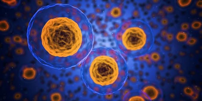 Fisiologia | Sistema Imunitário