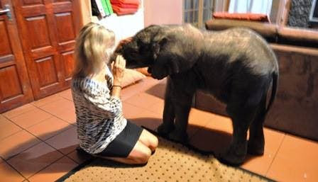 Image result for The little Elephant In The Room