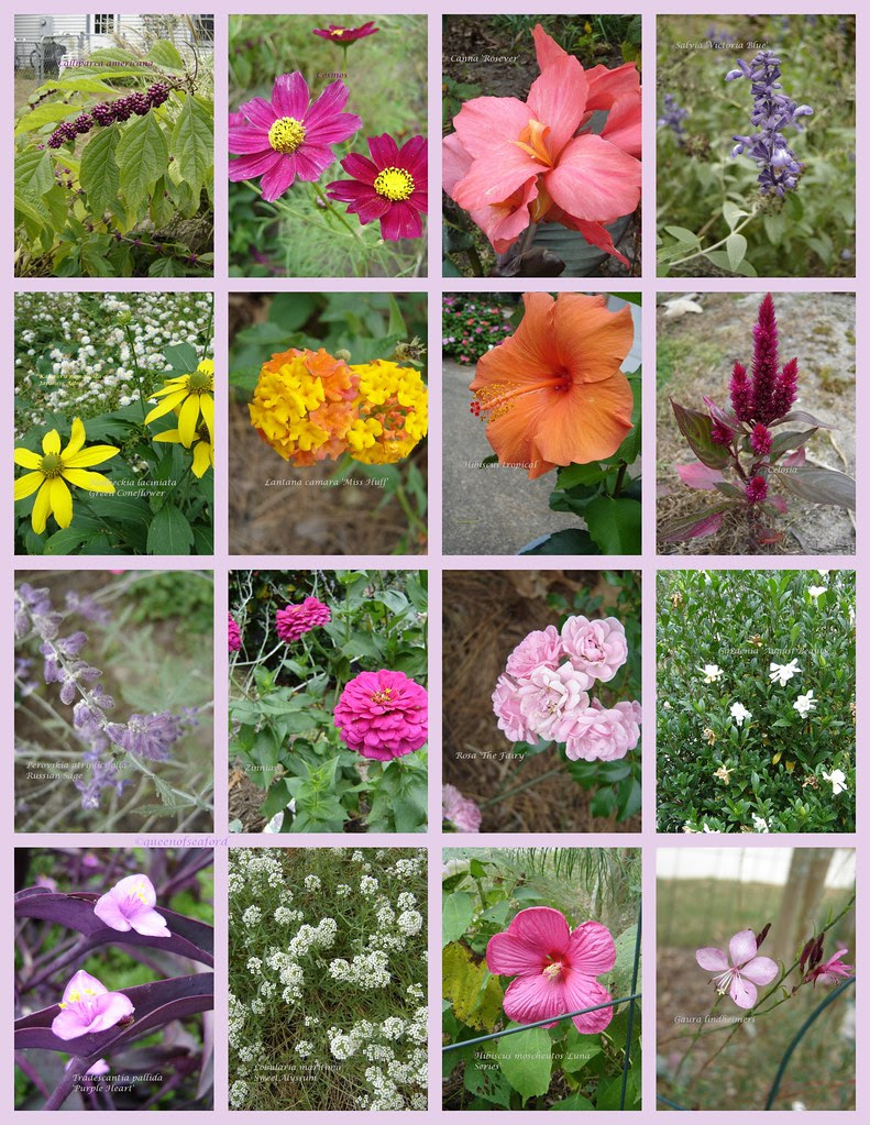 october 14 bloom day