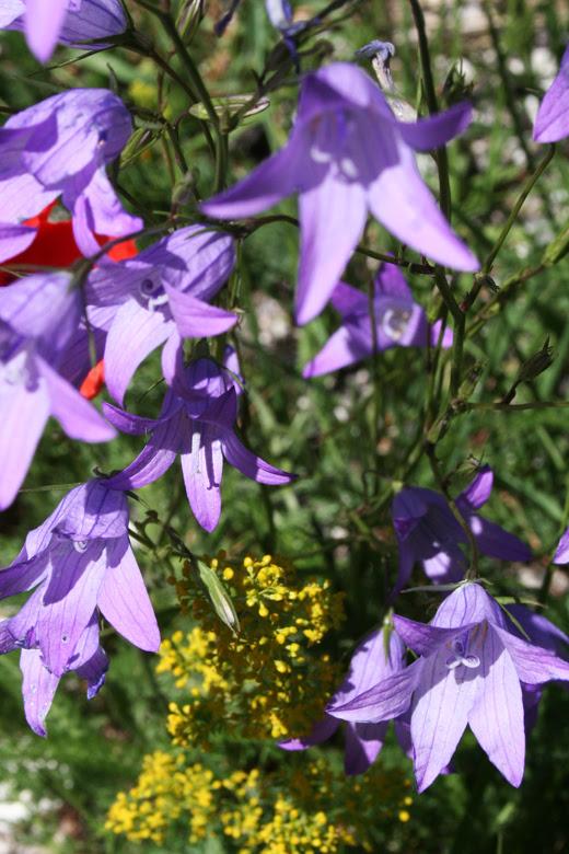 fioritura 2011_15