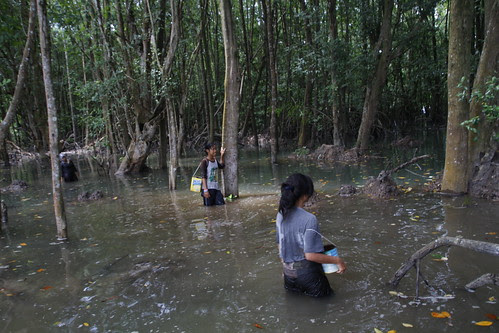 The supporting players in the Mangrove scene
