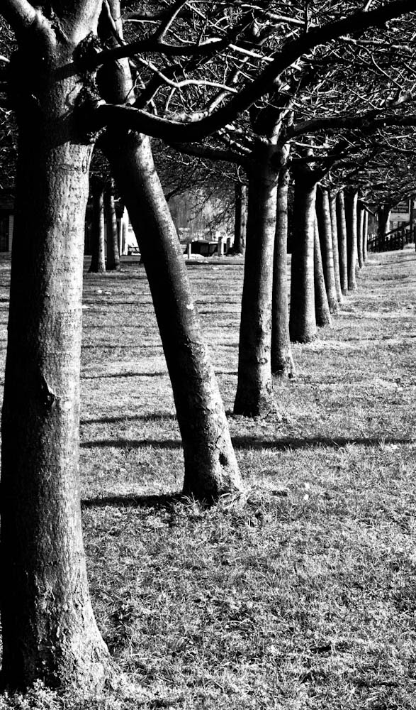 Stratford upon Avon Trees B&W