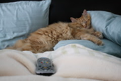 Napping Jasper
