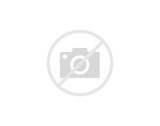 Black Lentil Beans Pictures