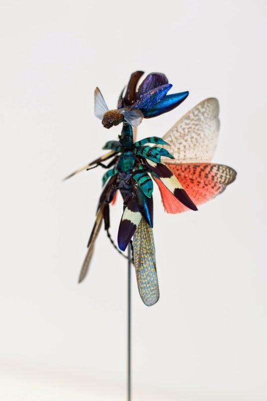 fee insecte graine morceau assemblage 09 533x800 Les fées de Cedric Laquieze