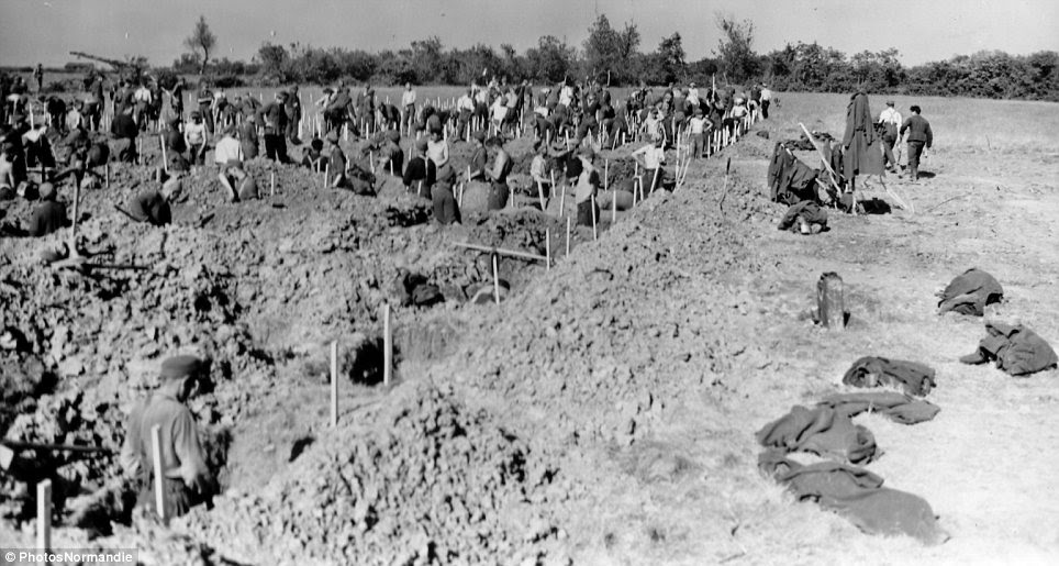 Grim: Under the baking sun, German prisoners dig tombs for the casualties of battle at a temporary cemetery near Colleville-sur-Mer