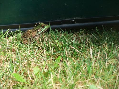 frog with canoe