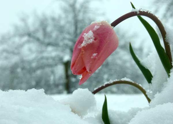 snow 雪 下雪