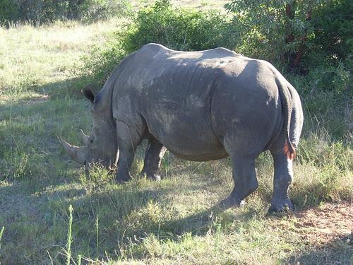 Sydafrika feb 2007 173