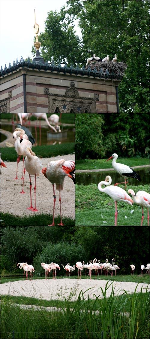 Cicogne e flamingo