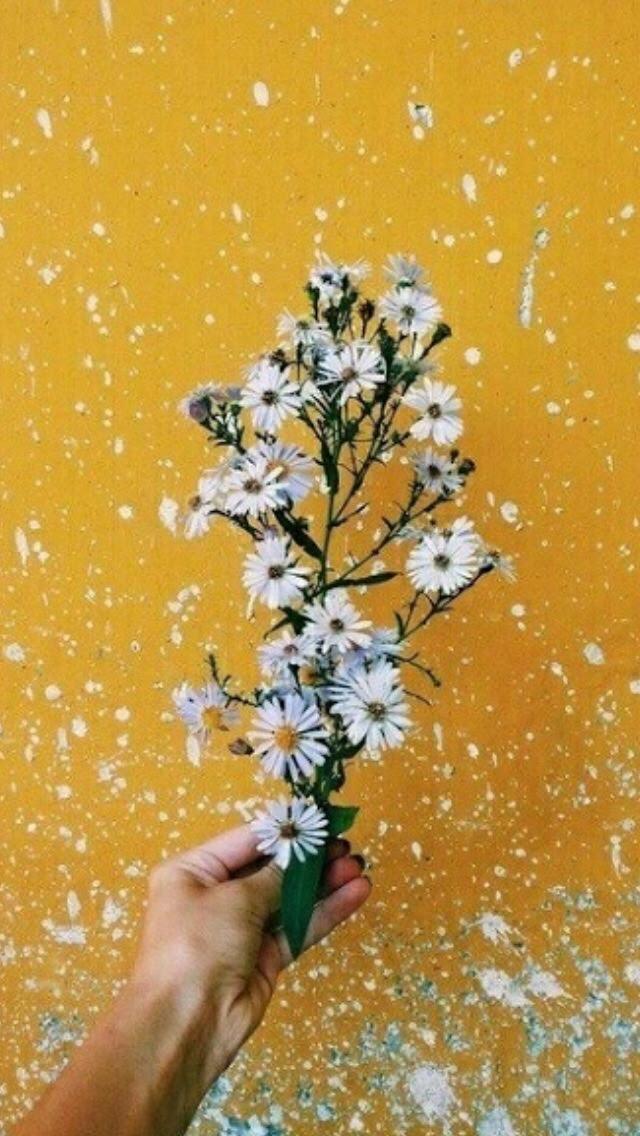 Gambar Aesthetic Bunga Hd Dunia Gambar