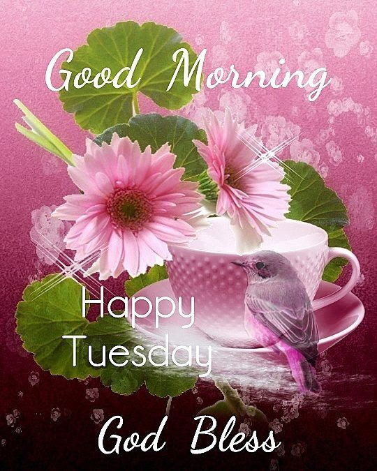 Good Morning Happy Tuesday God Bless Pictures Photos And Images