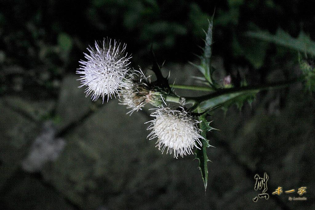 奮起湖冬季螢火蟲活動  龍雲農場