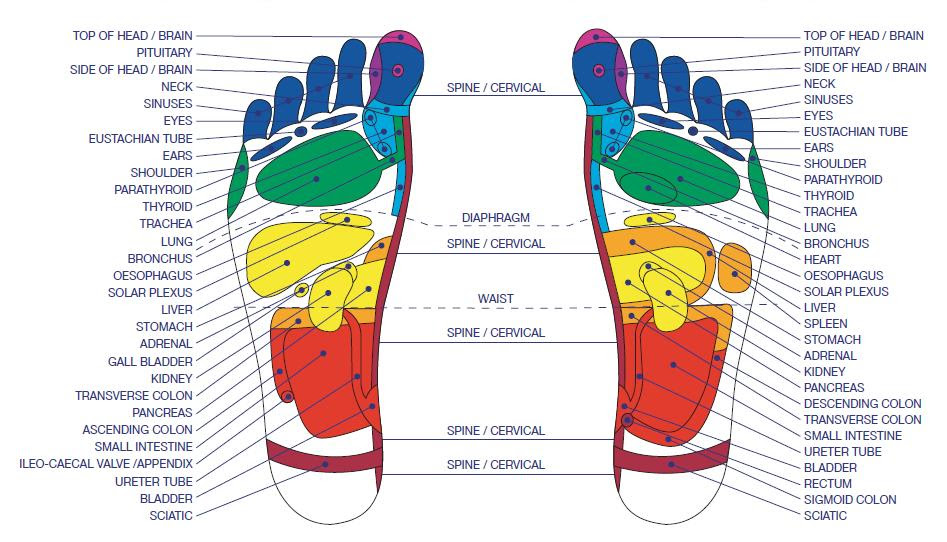 Foot Pressure Points: 15 Reflexology Pressure Points to ...