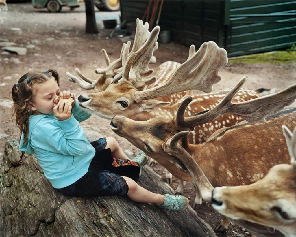 O Mundo de Amelia - A menina que cresceu com os animais e os considera seus irmãos 12