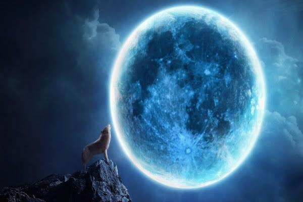 Lobo Aullando En Una Noche De Luna Llena 7643