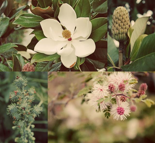 Inspiring plants I saw on my walk