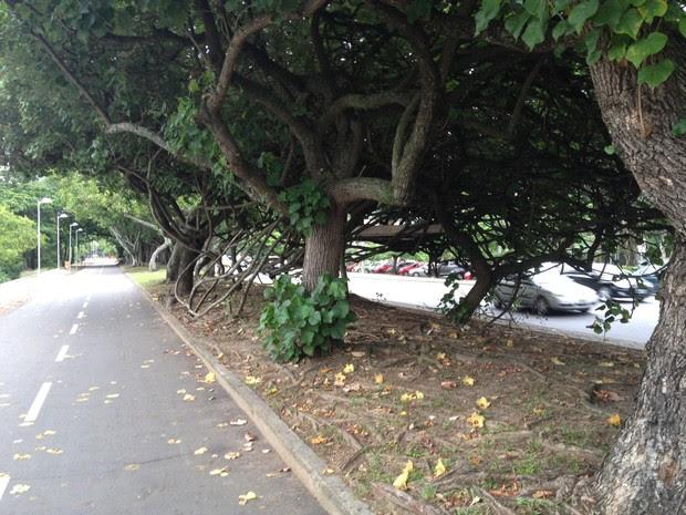Árvores onde o homem colocou o colchão ficam entre a Avenida Epitácio Pessoa e à ciclovia da Lagoa (Foto: João Bandeira de Mello / G1)