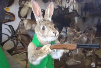 Mr Bangy Bunny