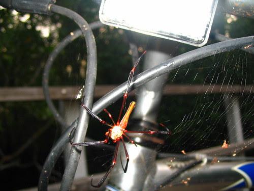 Orb weaver spider on my bike