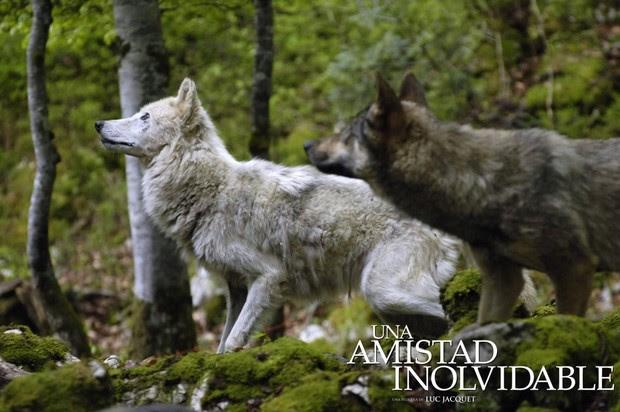Aprender A Dibujar Los Lobos Salvajes Eshellokidscom