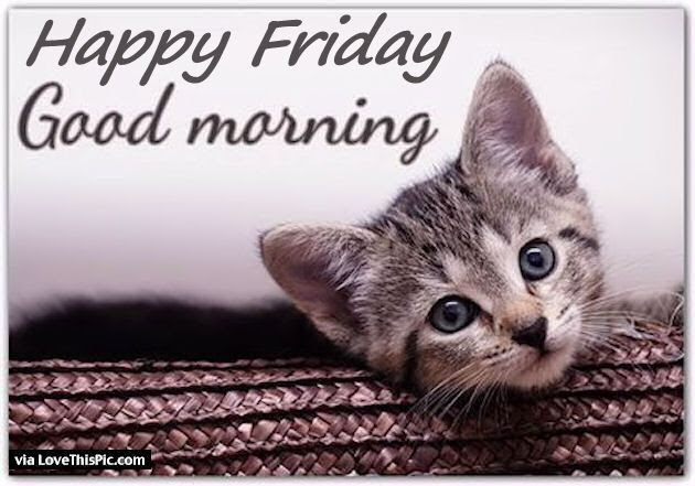 Good Morning Happy Friday Quote With A Cute Kitten Pictures Photos