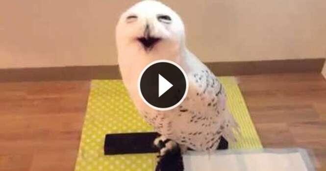 Vídeo: 15 segundos da risada desta coruja vão alegrar o seu dia
