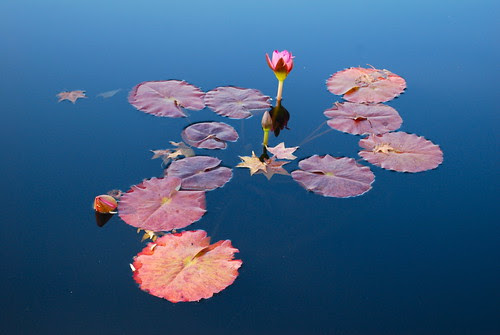 From stillness