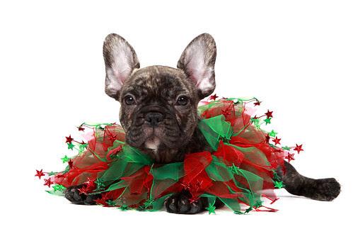 Feliz Navidad by Megan Lorenz