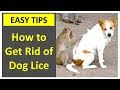 How To Get Rid Of Lice On Dogs Naturally