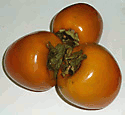 perimmons fruits