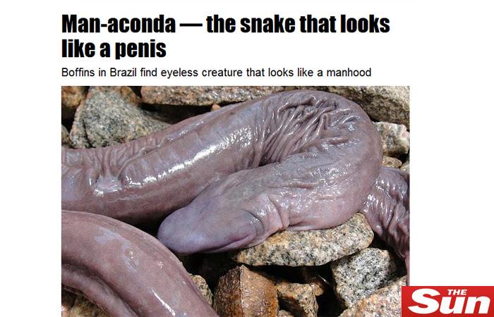 cobra-penis-hg