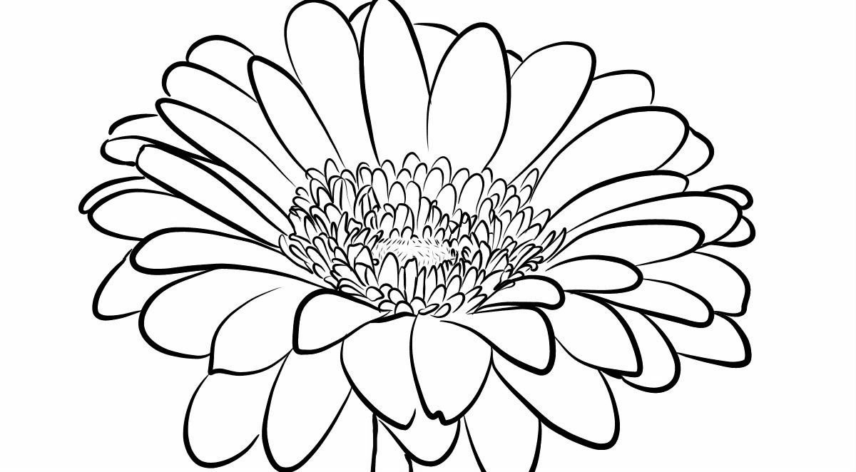 Gerbera Daisy coloring page | Free Printable Coloring Pages