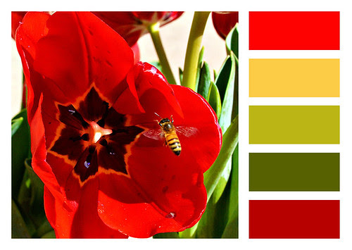 Tulip and Bee Colors