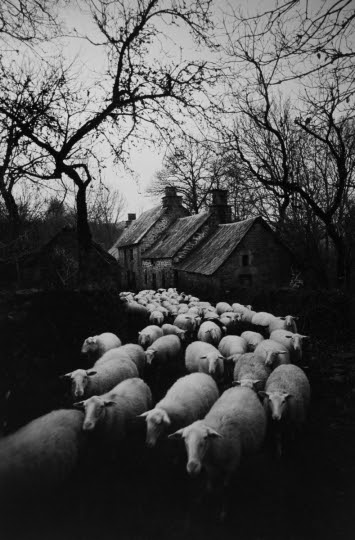 Monde paysan. Bergerie. Corrèze (France), 1965-1967. Photographie de Jean Marquis (né en 1926). © Jean Marquis / Roger-Viollet